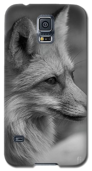 Red Fox Portrait In Black And White Galaxy S5 Case