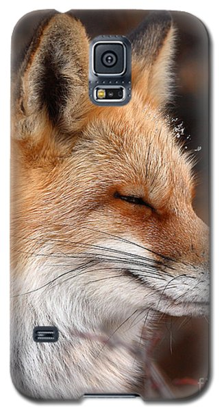 Red Fox With Ice Formed On Brow Galaxy S5 Case by Max Allen