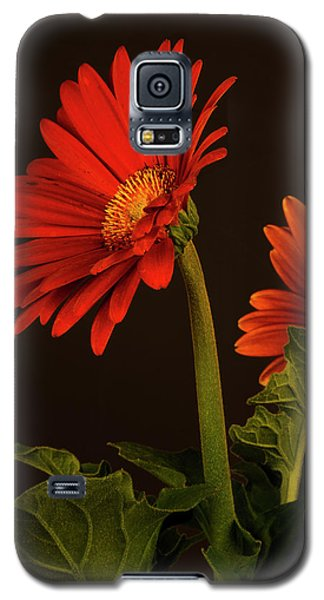 Galaxy S5 Case featuring the photograph Red Gerbera Daisy 1 by Richard Rizzo