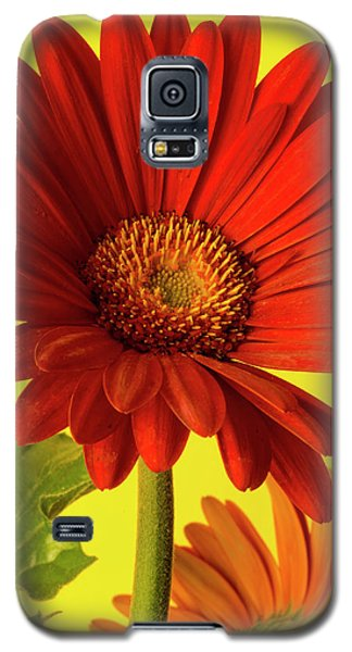 Galaxy S5 Case featuring the photograph Red Gerbera Daisy 2 by Richard Rizzo
