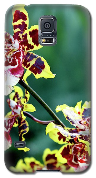 Striped Maroon And Yellow Orchid Galaxy S5 Case