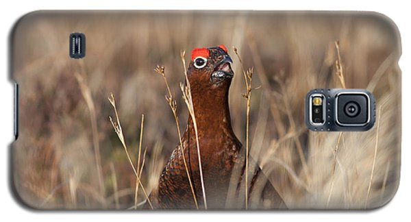 Red Grouse Calling Galaxy S5 Case