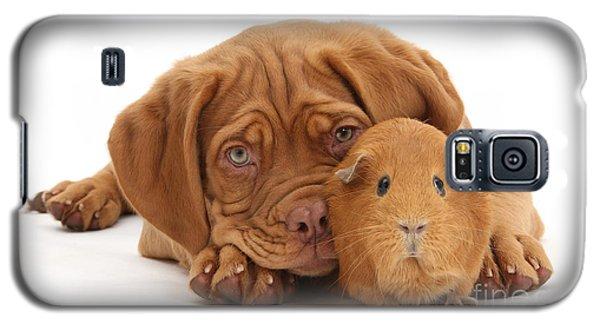 Red Guinea Pig And Dogue De Bordeaux Galaxy S5 Case