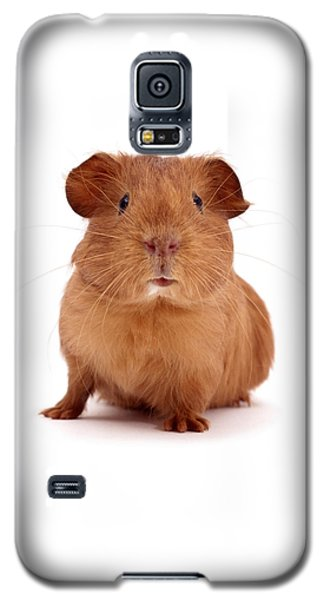 Red Guinea Pig Galaxy S5 Case