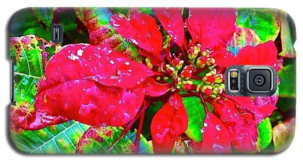 Red Hawaiian Poinsettia Galaxy S5 Case