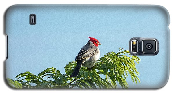 Red-headed Cardinal On A Branch Galaxy S5 Case