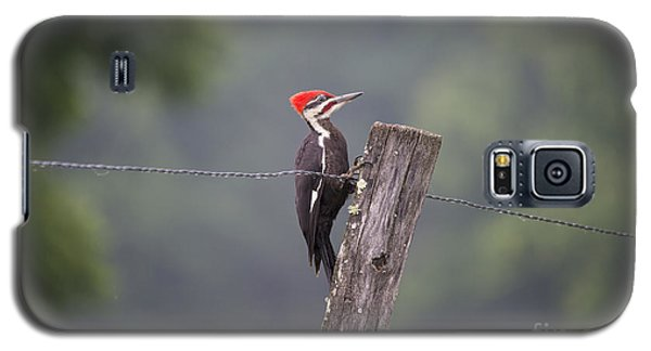 Red Headed Pileated Woodpecker Galaxy S5 Case