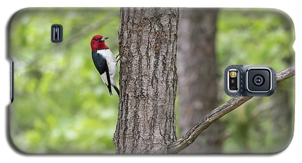 Red-headed Woodpecker 2017-1 Galaxy S5 Case by Thomas Young