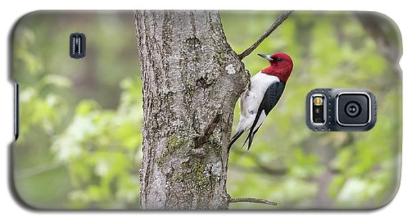 Red-headed Woodpecker 2017-2 Galaxy S5 Case by Thomas Young