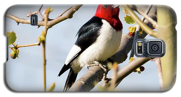 Galaxy S5 Case featuring the photograph Red-headed Woodpecker At A Glace  by Ricky L Jones
