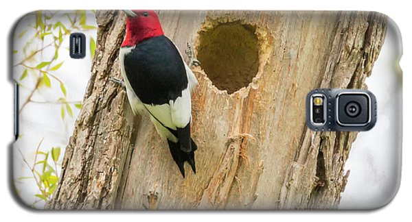 Galaxy S5 Case featuring the photograph Red-headed Woodpecker At Home by Ricky L Jones