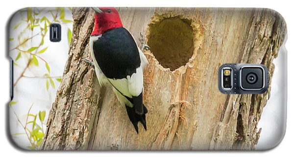 Red-headed Woodpecker At Home Galaxy S5 Case