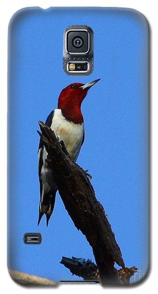 Red Headed Woodpecker On A Snag Galaxy S5 Case
