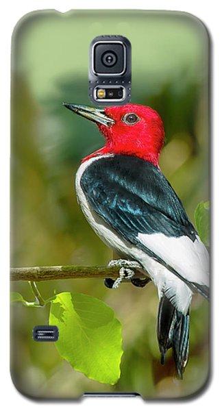 Red-headed Woodpecker Portrait Galaxy S5 Case