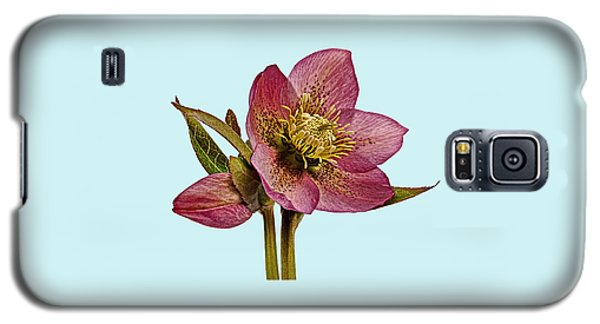 Red Hellebore Blue Background Galaxy S5 Case by Paul Gulliver