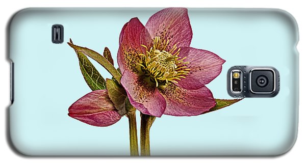 Galaxy S5 Case featuring the photograph Red Hellebore Blue Background by Paul Gulliver