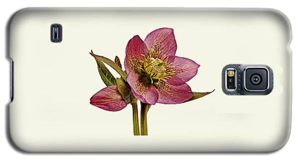 Red Hellebore Cream Background Galaxy S5 Case by Paul Gulliver