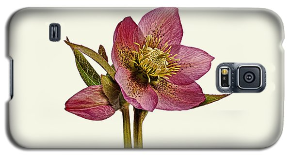 Galaxy S5 Case featuring the photograph Red Hellebore Cream Background by Paul Gulliver