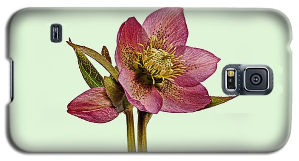 Galaxy S5 Case featuring the photograph Red Hellebore Green Background by Paul Gulliver
