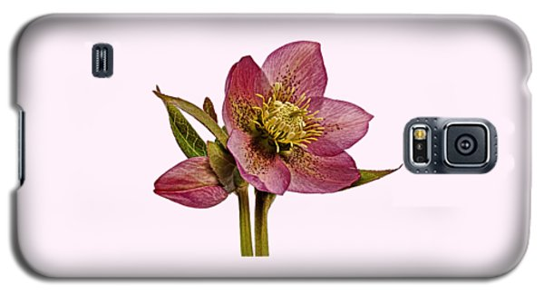 Galaxy S5 Case featuring the photograph Red Hellebore Transparent Background by Paul Gulliver