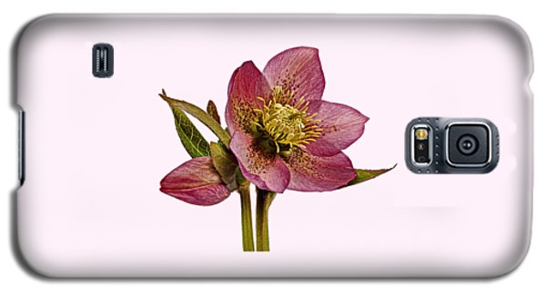 Red Hellebore Transparent Background Galaxy S5 Case by Paul Gulliver