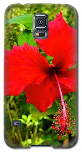 Red Hibiscus In Puna Galaxy S5 Case