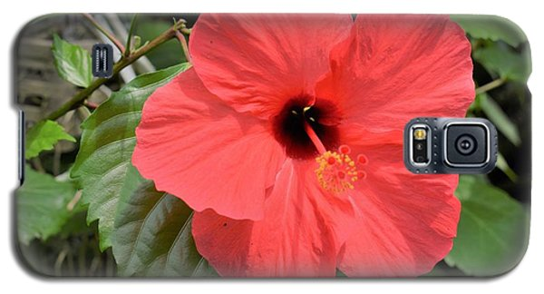 Red Hibiscus Galaxy S5 Case
