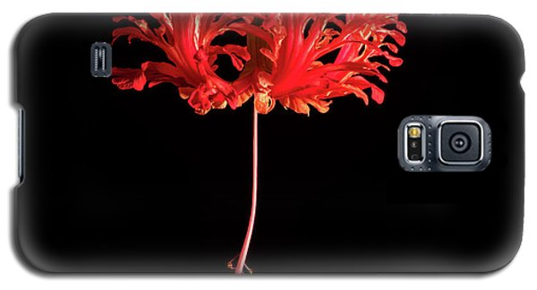 Red Hibiscus Schizopetalus On Black Galaxy S5 Case
