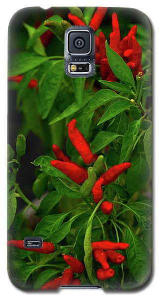 Red Hot Chili Peppers Galaxy S5 Case