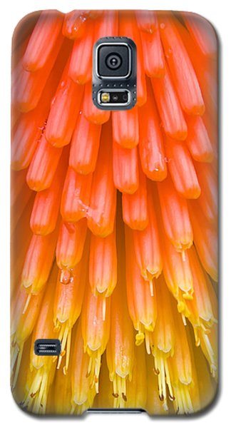 Red Hot Poker Flower Close Up Galaxy S5 Case