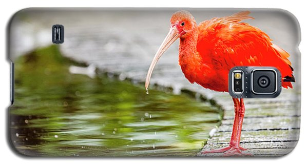 Galaxy S5 Case featuring the photograph Red Ibis by Alexey Stiop