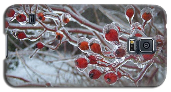 Red Ice Berries Galaxy S5 Case