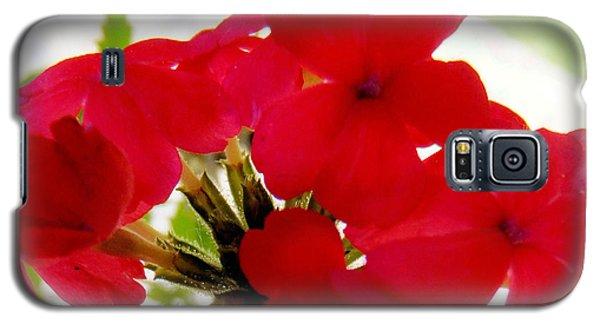 Red In The Garden Galaxy S5 Case by Carolyn Repka