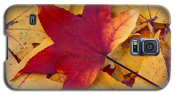 Galaxy S5 Case featuring the photograph Red Leaf by Chevy Fleet