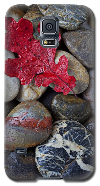 Red Leaf Wet Stones Galaxy S5 Case