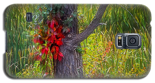 Red Leaves And Vines On Tree In Forest Of Reeds Galaxy S5 Case