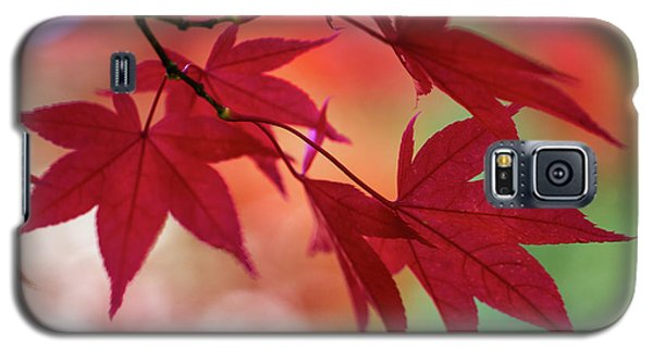 Galaxy S5 Case featuring the photograph Red Leaves by Clare Bambers