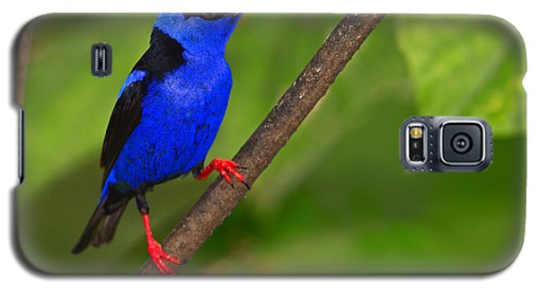 Red-legged Honeycreeper Galaxy S5 Case