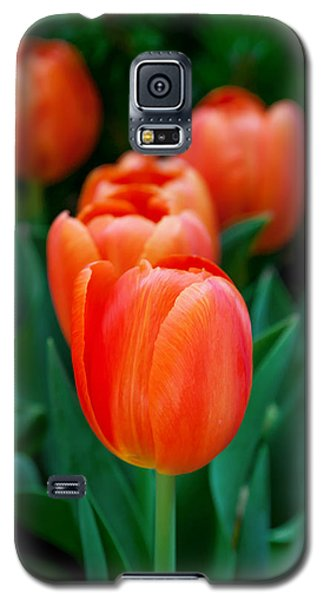 Tulip Galaxy S5 Case - Red Tulips by Az Jackson