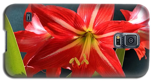 Red Lily Flower Trio Galaxy S5 Case