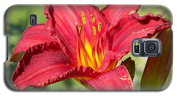 Galaxy S5 Case featuring the photograph Red Flower by Eunice Miller
