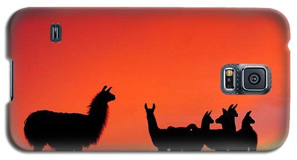 Red Llama Sunset 2 Galaxy S5 Case