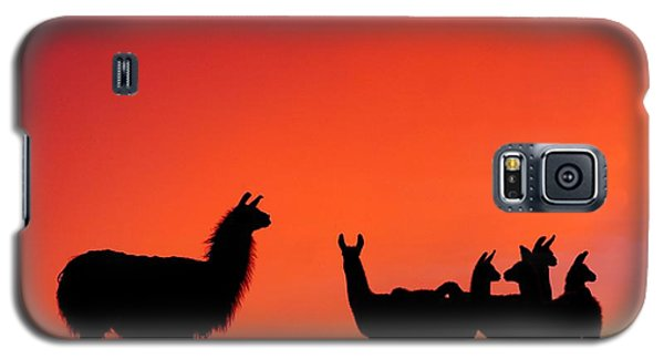 Red Llama Sunset 2 Galaxy S5 Case