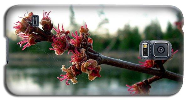 Red Maple Buds At Dawn Galaxy S5 Case by Kent Lorentzen