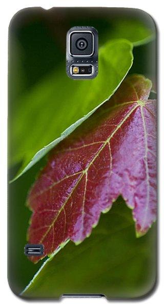 Red Maple Leaf Galaxy S5 Case