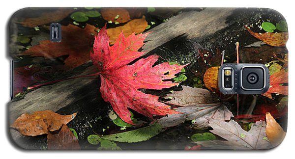 Galaxy S5 Case featuring the photograph Red Maple Leaf In Pond by Doris Potter