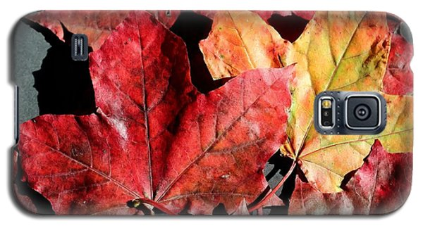Red Maple Leaves Digital Painting Galaxy S5 Case by Barbara Griffin