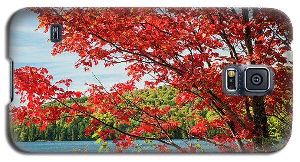 Galaxy S5 Case featuring the photograph Red Maple On Lake Shore by Elena Elisseeva