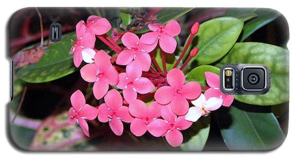 Red Maui Ixora Galaxy S5 Case by Terri Mills