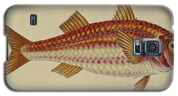 Sport Art Galaxy S5 Case - Red Mullet by English School